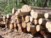 На северо-западе США будет закрыто лесопильное предприятие