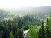 Влияние природных катаклизмов на лес