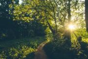 Коммерческие компании на страже лесных угодий
