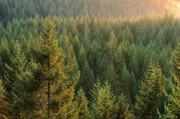 Лесные запасы Архангельской области