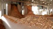 В США появится биотопливная электростанция стоимостью 100 млн долларов