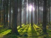Ценность лесопромышленного комплекса