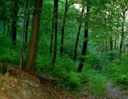 Богатства лесной промышленности