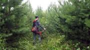 Применение программы комплексного ухода за лесными насаждениями