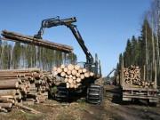 Заготовка круглого леса в мире