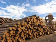 Деревообрабатывающая промышленность мира