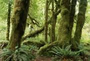 Удивительные качества тропических деревьев