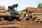 История и традиции в лесной промышленности