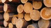Шведский целлюлозный комбинат SCA Ассоциация  Mellanskog обеспечит балансовой древесиной