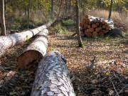 Смогут ли леса остаться частными?