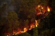 Управление тушением крупных лесных пожаров