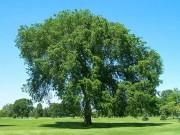 Как эволюционировали деревья