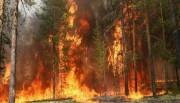Как мы теряем леса