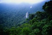 Тропические леса – защита от парникового эффекта