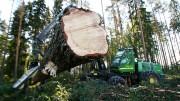 Уникальная история лесного хозяйства в России