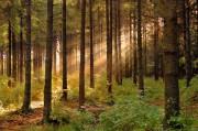 Защита лесных ресурсов спасёт нашу планету