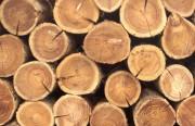 Древесина вместо нефти: предложен новый способ производства химических соединений