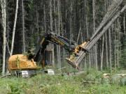 Лесопромышленный комплекс Карелии – прогнозы на будущее