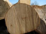 Объем мирового производства древесной продукции увеличился
