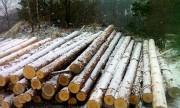 1,2 млн м3 древесины было заготовлено в Новосибирской обл. за прошлый год