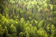 Как сохранить леса нашей планеты?