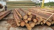 В семь раз возросли убытки от заготовки древесины в Республике Карелии