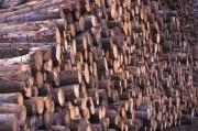 Экологические проблемы лесной промышленности