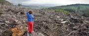 Проблемы рационального использования лесных ресурсов