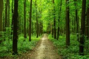 Мировая лесная и бумажная промышленность отметила международный день лесов
