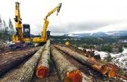 Как организованы лесозаготовки в России?