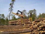 Нужна ли лесозаготовительная техника России?