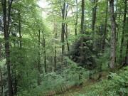 Географическое положение смешанных и широколиственных лесов России