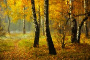 Смешанные и широколиственные леса России