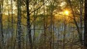 Зона широколиственных лесов России