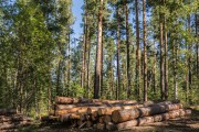 Роль расчётной лесосеки в современном лесном хозяйстве