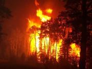 Лесные пожары в России – характеристики, причины возникновения, прогнозы, последствия