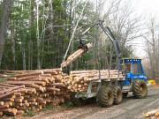 Виды лесной промышленности