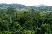 Тропические вторичные леса поглощают большие количества CO2