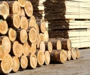 Развитие лесной промышленности