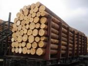 Немецкие компании импортируют круглые лесоматериалы из России