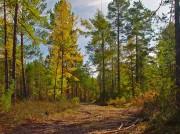 Почвенно-грунтовые условия произрастания лесокультур