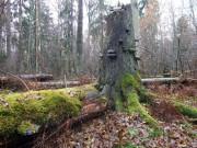 Франконский лес испытывает нашествие короедов