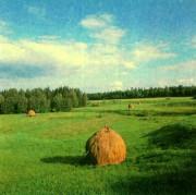 Почвы таежно-лесной зоны