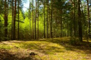 Особенности подготовки почвы под лесные культуры