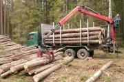 Правила сортиментной заготовки древесины