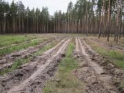 Лесовосстановление и лесоразведение – назначение и определение