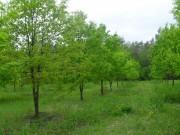 Правила лесовосстановления