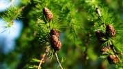 Важность ухода за молодняками леса