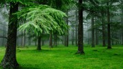 Характеристика елового леса