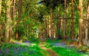Что входит в объекты лесной инфраструктуры?